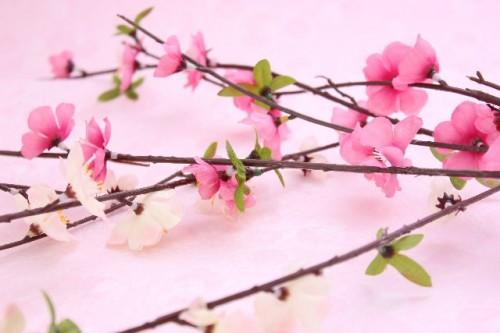 2月の代表的な花 紅梅