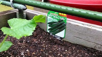 野菜苗のタグ