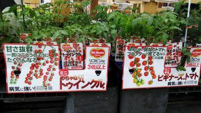 トマトのキャッチコピー