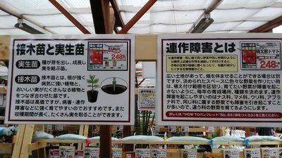 野菜苗の種類と連作障害の説明