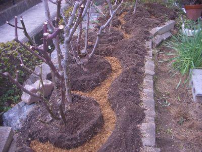 バラの寒肥作業