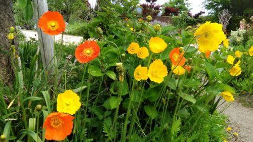 黄色とオレンジの花