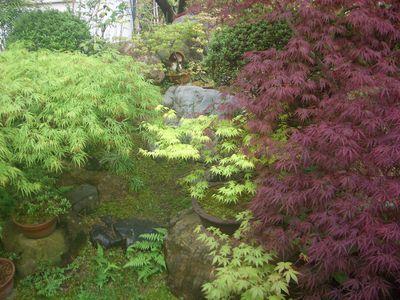 庭のモミジの風景