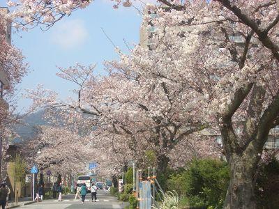 びわこ大津館の桜並木