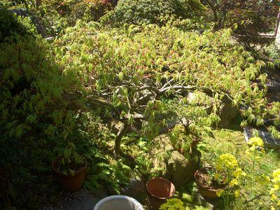 四季の庭は五感の宝庫