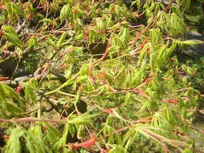 木々の新鮮な芽吹き