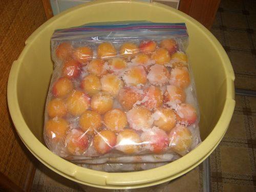 完熟梅の塩漬け10Kg