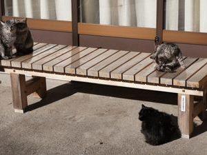 家庭菜園で野良猫の糞に迷惑も超音波グッズで被害がなくなった!