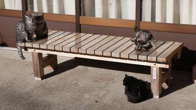 家庭菜園の野良猫糞被害